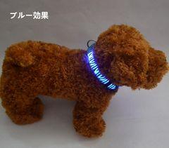 LEDバンド 幅2.5cm 犬 猫 LED首輪 ブルー色 サイズXL