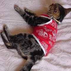 猫服 和柄ランニングキャット SS レッド★新品
