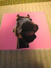 CD:ハイロウズ DO!!The MUSTANG 紙ジャケット