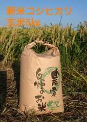 茨城29年産コシヒカリ玄米5�s