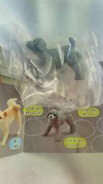 【マーキング犬 2】《トイプードル(シルバー)》
