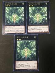 遊戯王 日本版 メリアスの木霊3枚(レア) SHSP