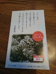 お花の種/スイートアリッサム♪ガーデニング♪最安送料82円♪