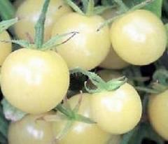超甘い アイススノー ミニトマト 3粒