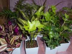 ミニ観葉植物14鉢セット/送料込み
