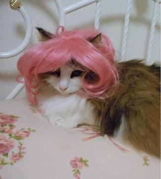 SALE【オリジナル】Wigs2you☆P-003☆犬☆猫☆ペットウィッグ